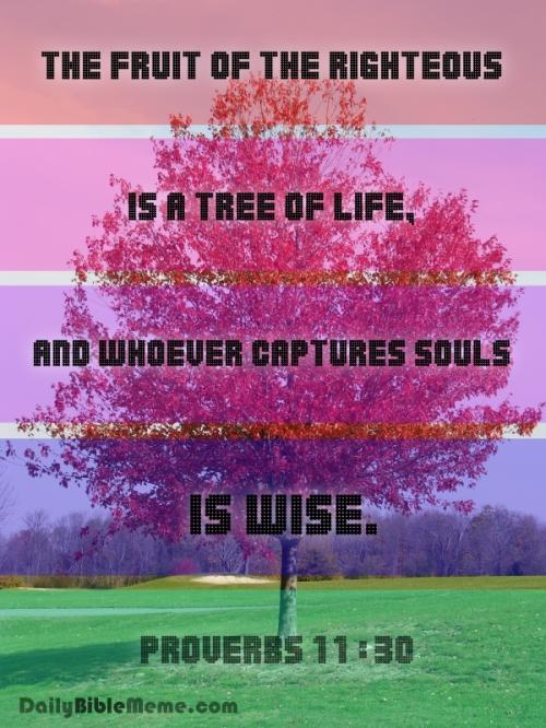 proverbs11-30